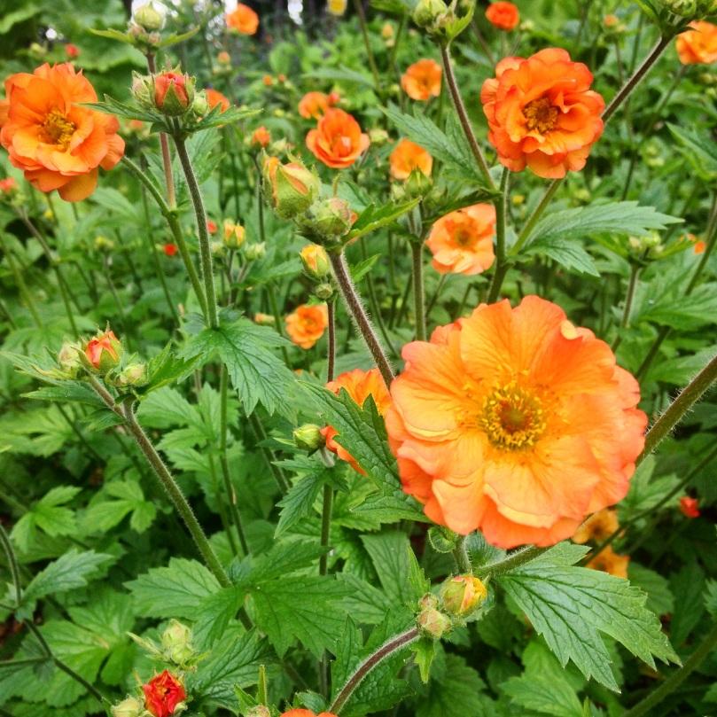 Rococo-Garden-43