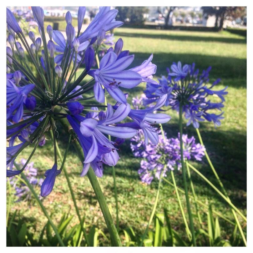 Blue-Skies-Belém-17